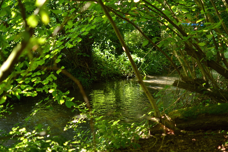 riviere-omignon-vue-des-cabanes