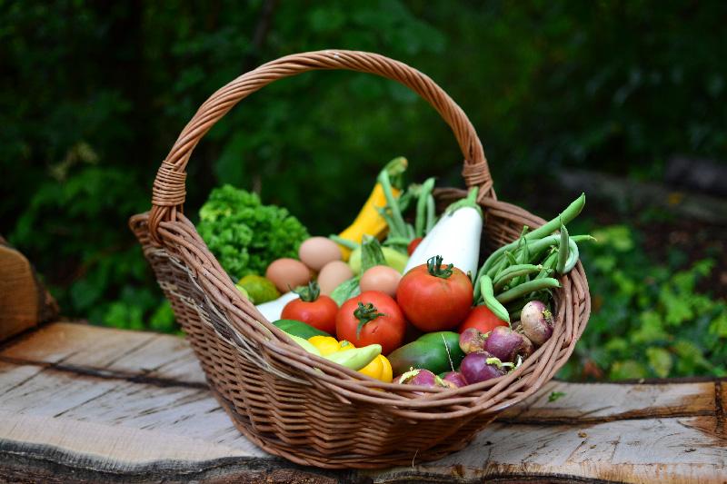 circuits-cours-et-locavores-legumes-rendez-vous-fermiers