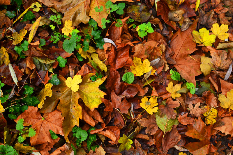 feuilles d'automne durant un séjour insolite à La Maison de l'Omignon