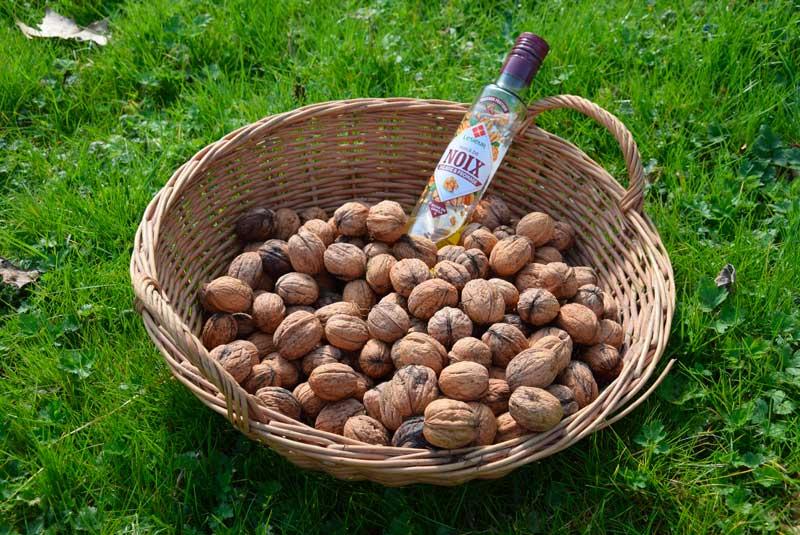 reconnaitre les fruits du noyer les noix