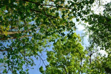 weekend nature reconnaitre les arbres à la maison de l'omignon