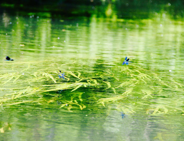 balade-canoe-libellules-bleues