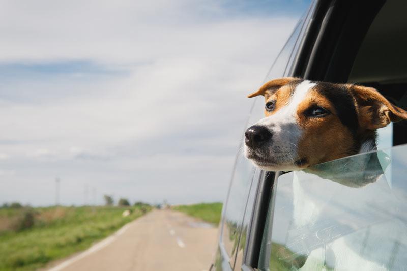 partir-en-vacances-avec-chien