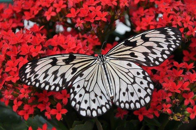 activite-avec-les-enfants-en-picardie-musee-papillons