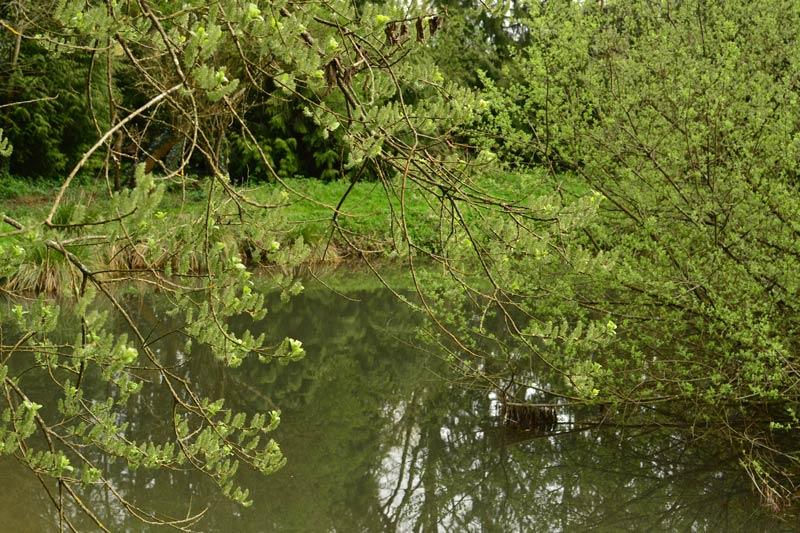 nature-en-picardie-aux-roulottes-de-l-omignon