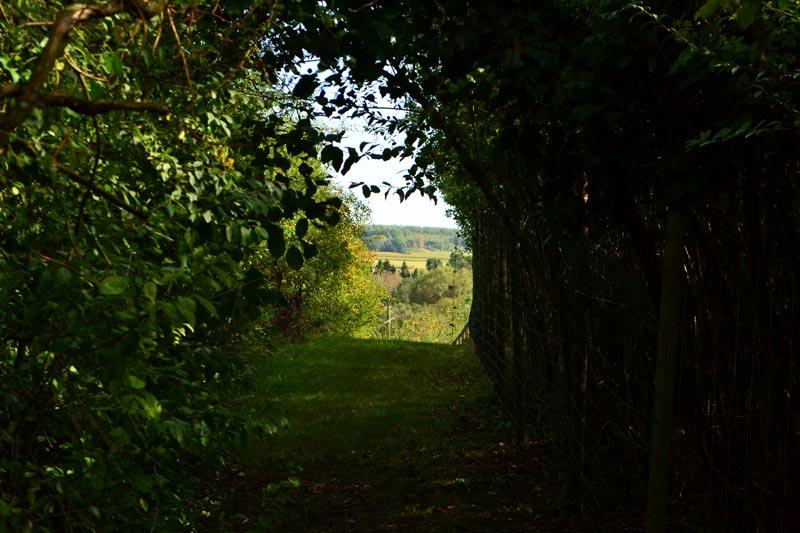 oppidum-vermand-village-gaulois