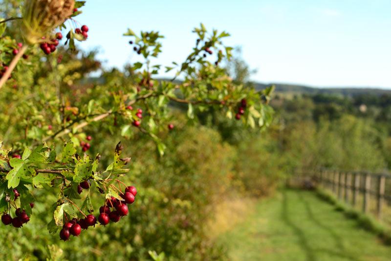 opppidum-automne
